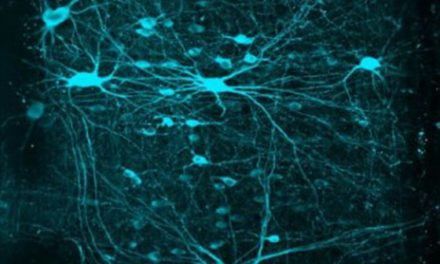 Salk Institute Study Reveals Contrasts in the Neurons That Control Limbs