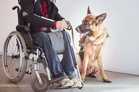 A Service Dog's Impact Extends Beyond the Care Recipient